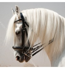 English leather bridle two reins